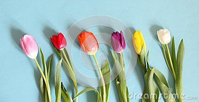 Some tulips with different colors with blue background