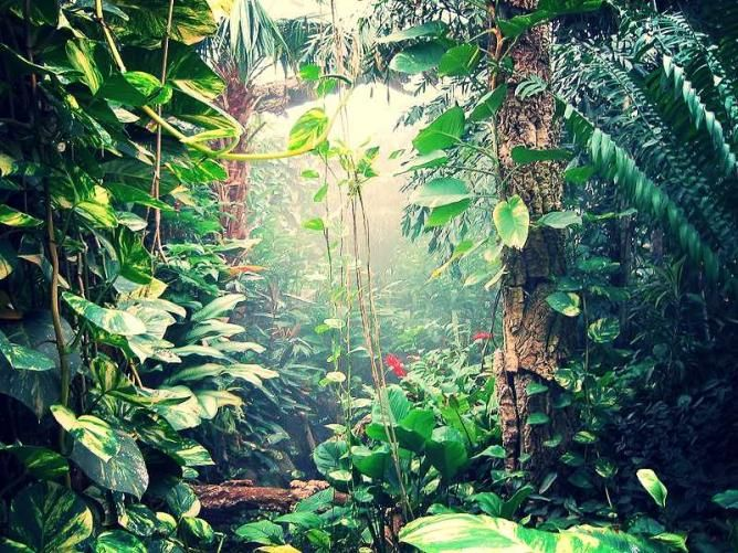 Image result for roundhay tropical world