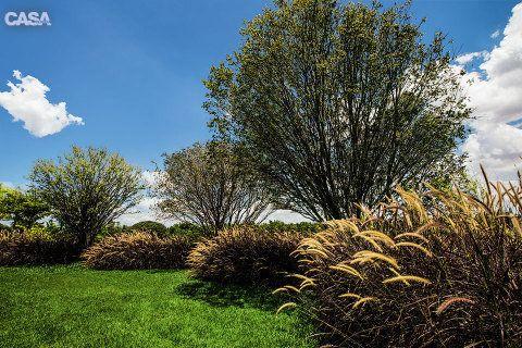 Jabuticabeiras contracenam com maços de capim-do-texas-roxo (Pennisetum setaceum). O conjunto traz privacidade sem impedir que os moradores avistem o campo de golfe do condomínio.