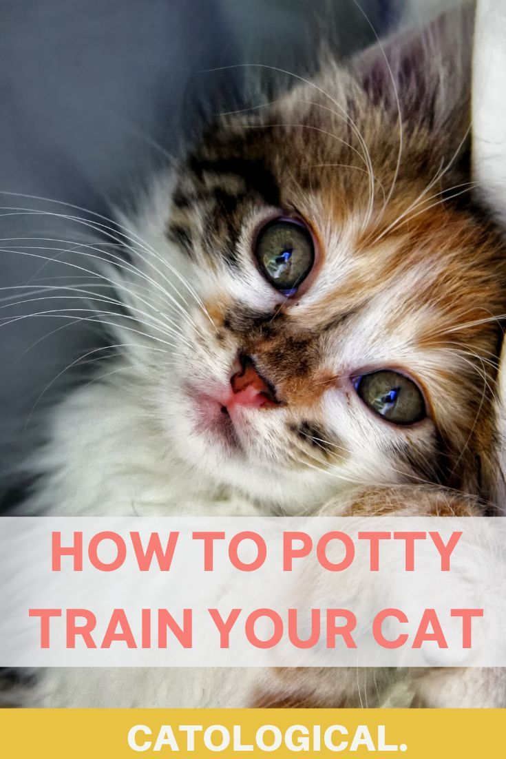 How To Potty Train Your Cat Though You Probably Shouldn T In 2020 Cat Love Quotes Cat Parenting Cat Training