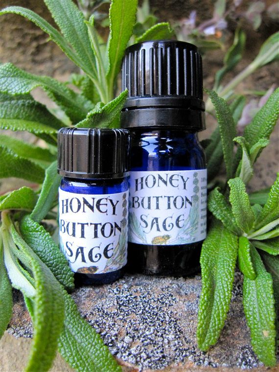 Honey Button Sage (Salvia mellifora), also known as Black Sage, was a favorite plant of my mother's. She used vapor from steaming sage to cure colds and boiled it into a paste to treat poison oak rash. Honey Button sage is a plant indigenous to Santa Barbara, California, and was used