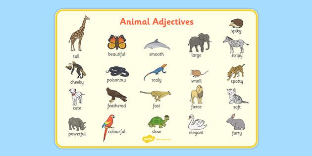 * NEW * Animal Adjectives Word Mat
