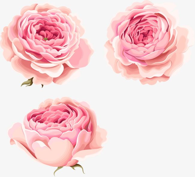 Hand Painted Beautiful Pink Peony Flowers Free Watercolor Flowers Pink Watercolor Flower Flower Illustration