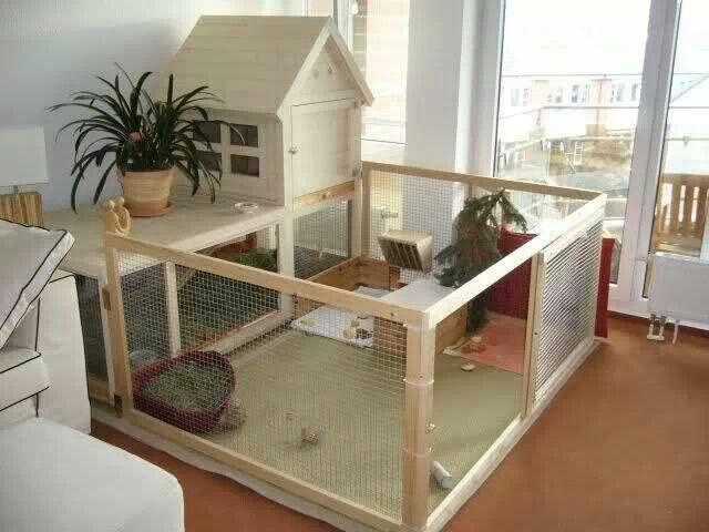 Beautiful bunny house