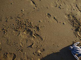 Ravelry: PEACE. A Leatherback Turtle pattern by Rosaura Valdez