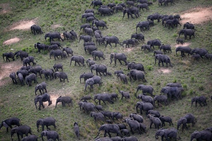 Cuando las criaturas salvajes se reúnen: impresionantes imágenes del reino animal | Notas | La Bioguía
