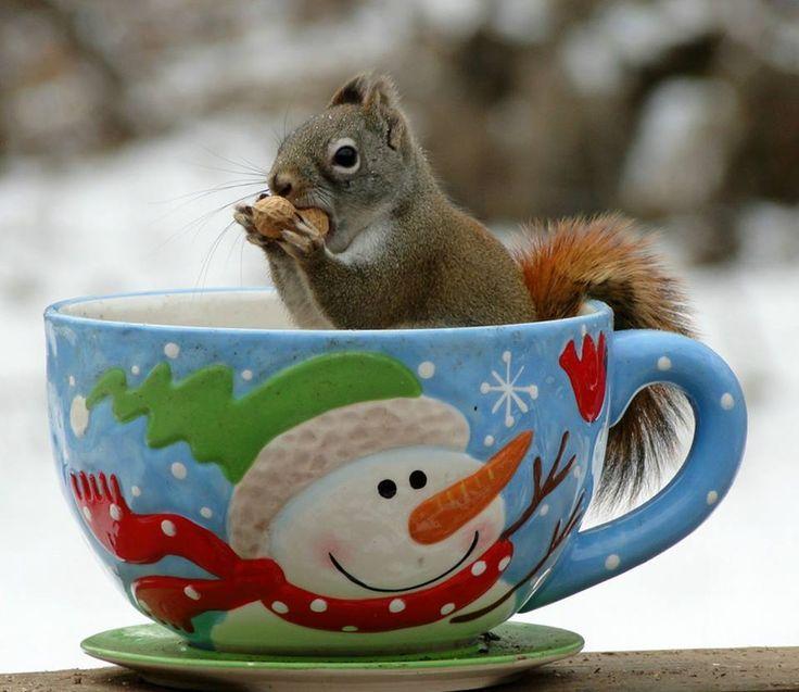 Картинки зимний привет с чаем