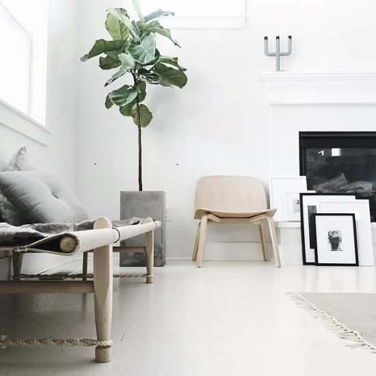 TRENDY PLANTS⎬FIDDLE-LEAF FIG (FICUS LYRATA) | Fiddle leaf