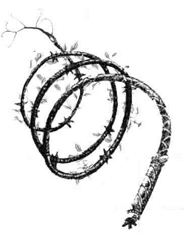 Vine whip weapon