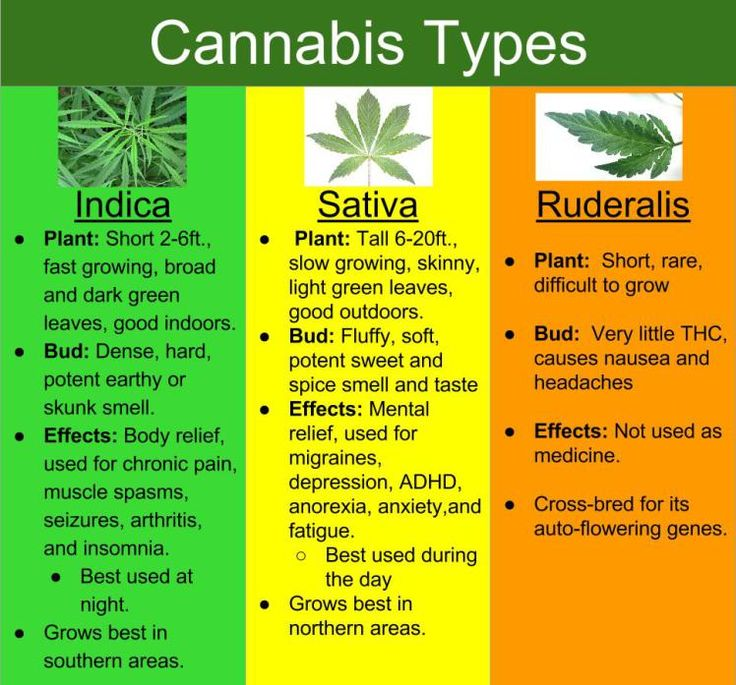 The 3 original cannabis types