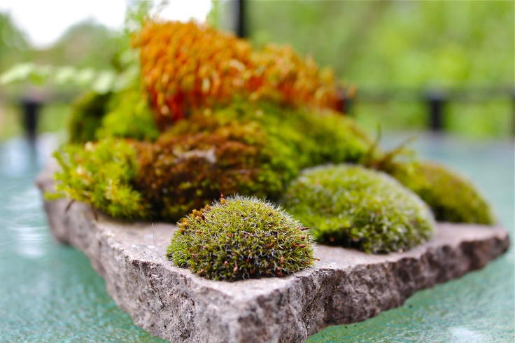 17 Best Images About Rockery On Pinterest To Be Gardens