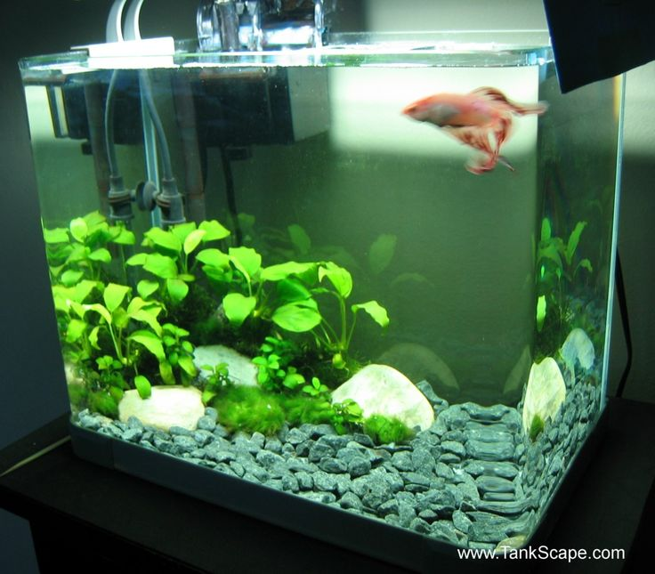 betta tank set ups   Tank Scape: My Betta Tank: The River Bed