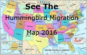 Hummingbird Migration Spring 2016. Migration sightings and map for Spring 2016.