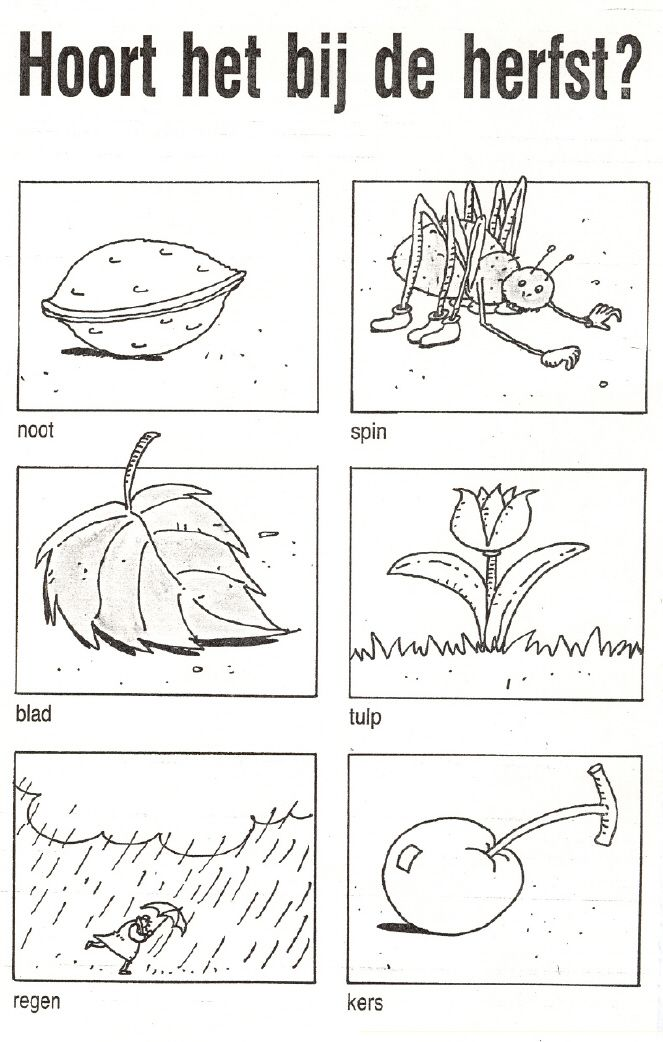 herfstblad kleur afbeelding - Google zoeken