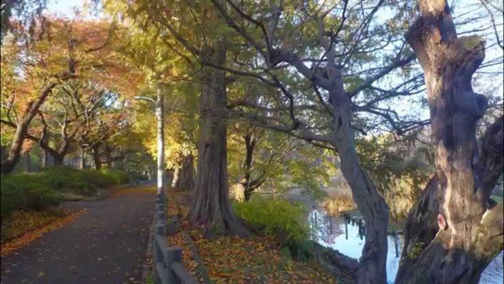 晩秋の癒し風景 都立 善福寺公園散歩 小さい秋 見つけた・・