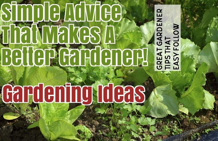 Grow Organic Produce For Your Family With These Tips – Gardening Activities
