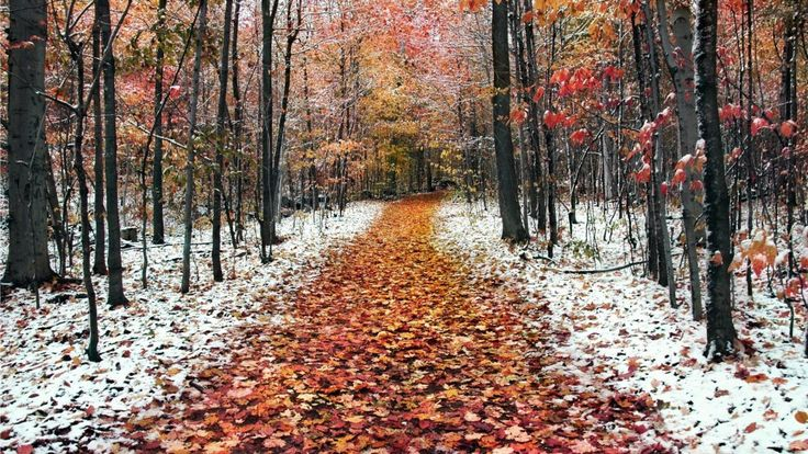 Forest In Two Seasons Winter Fall