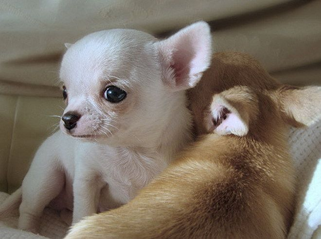 babies and puppies | CUTEST BABY puppies!! - Dogs Photo ...