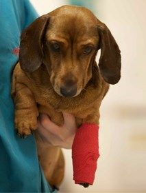 Do you have a plan in case your pet is involved in an emergency, or ever wonder what is involved if you need an emergency vet? Find out what to do if you need an emergency vet here: http://www.vets-now.com/pet-owners/what-to-do-in-an-emergency/