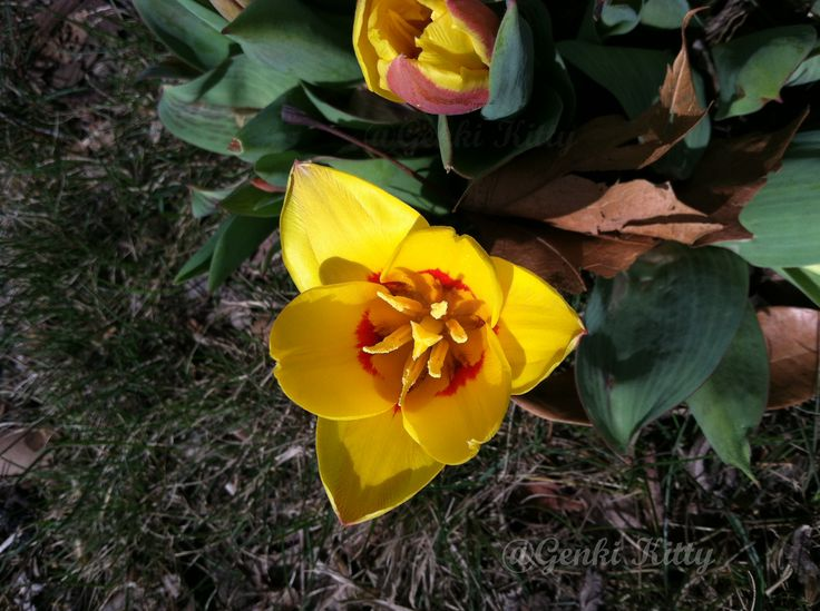 Spring flowers 2015 south bend