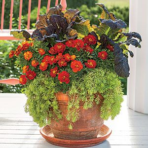 Best Ideas for Fall Container Gardening | Stunning Marigold Fall Container | SouthernLiving.com