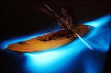 Bioluminescent Bay, Fajardo, Puerto Rico  Kayak & paddle contact makes the water glow