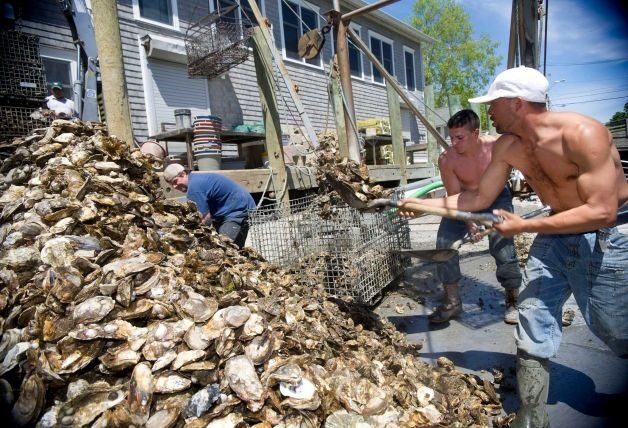 From left, Captain Steve Hopkins, Patrick McGlone, and Rene Euceda unload oysters from a boat at Norm Bloom and Son in Norwalk, Conn., on Friday, May 17, 2013. Photo: Lindsay Perry / Stamford Advocate