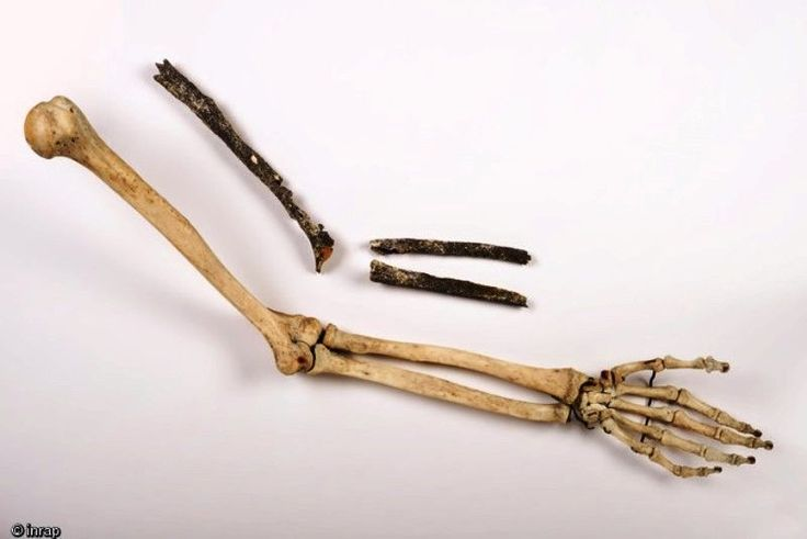 Paléontologie: Un nouveau pré-Néandertalien découvert : l'Homme de Tourville-la-Rivière avec 2 vidéos - Frawsy