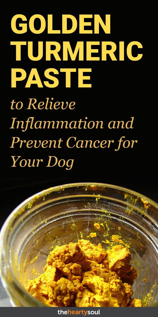 Give Your Dog a Tbsp  of This Golden Turmeric Paste to Relieve