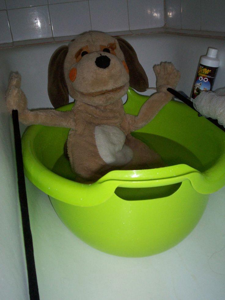 Burkus kutya készül a tavaszi előadásokra. :D