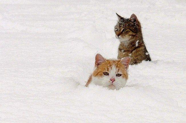 Cicák a hóban
