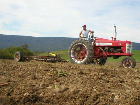 Growing alfalfa hay