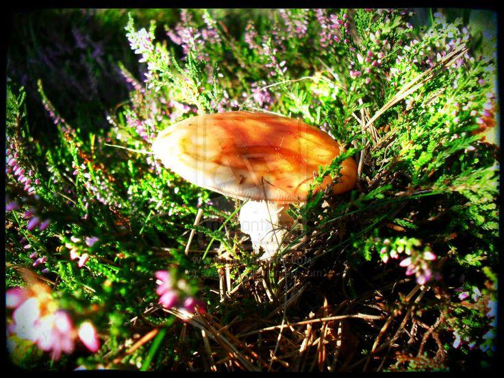 Mushroom by swapthat.deviantart.com