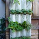 "How to grow a herb garden in a show caddy  VERTICAL VEGETABLES: ""Grow up"" in a small garden and confound the cats!"