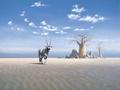 Oryx-Kalahari