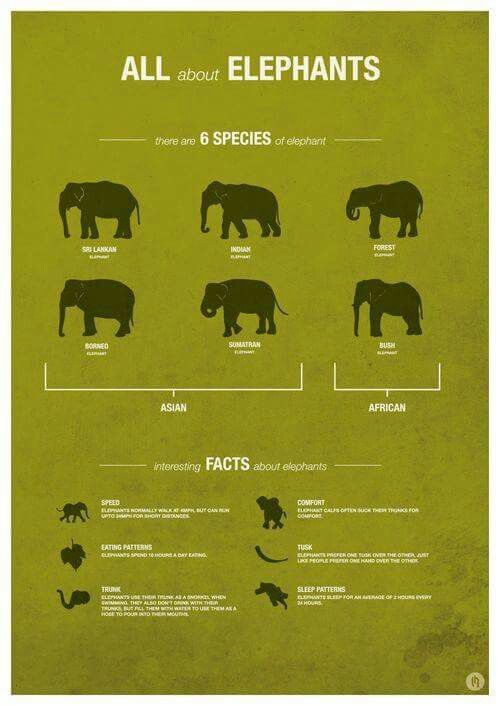 Types of elephants