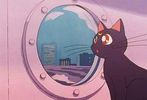 cat, luna, and sailor moon image