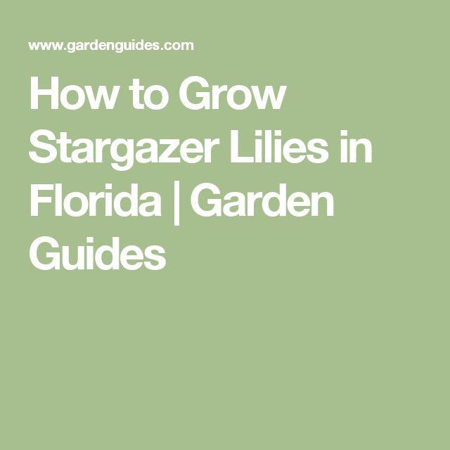 How to Grow Stargazer Lilies in Florida |  Garden Guides