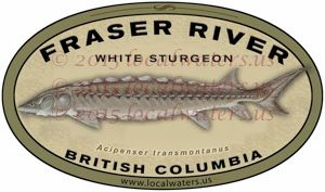 Fraser River Sticker White Sturgeon Fishing Decal British Columbia Canada - Durable outdoor rated Guaranteed 3 years laminated UV and waterproof Car - Boat