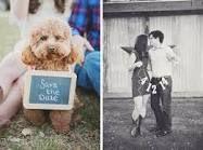 save the date com cachorro - Pesquisa Google