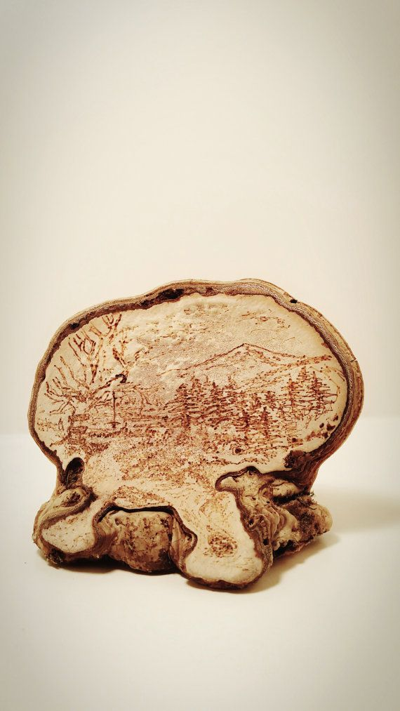 One Of A Kind Artist Conk Art Original Wood Burned By Corkyfriendz Mushroom Art Art Artist