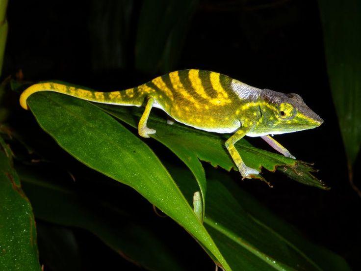 Las especies más amenazadas | Fotogalería | Sociedad | EL PAÍS