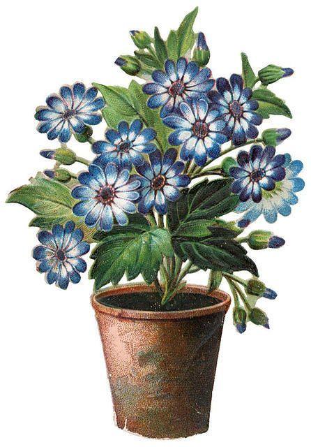 Flowers482: