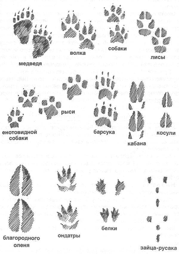 пластических следы животных на снегу фото с названиями фотографии приятные визуально