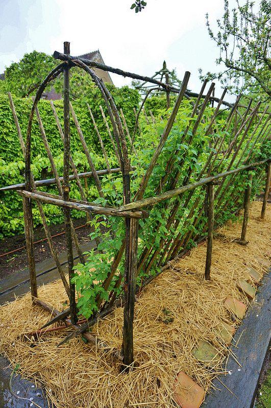 17 best images about urban garden trellis tomato for Vegetable garden trellis designs