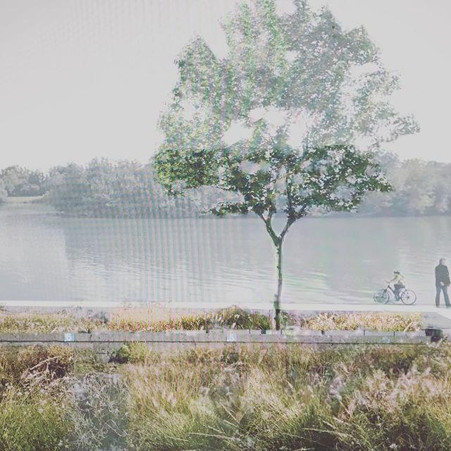 Jardin des rives #garden#landscape#design#illustration#aureliegueniffey#jardin#gardendesign