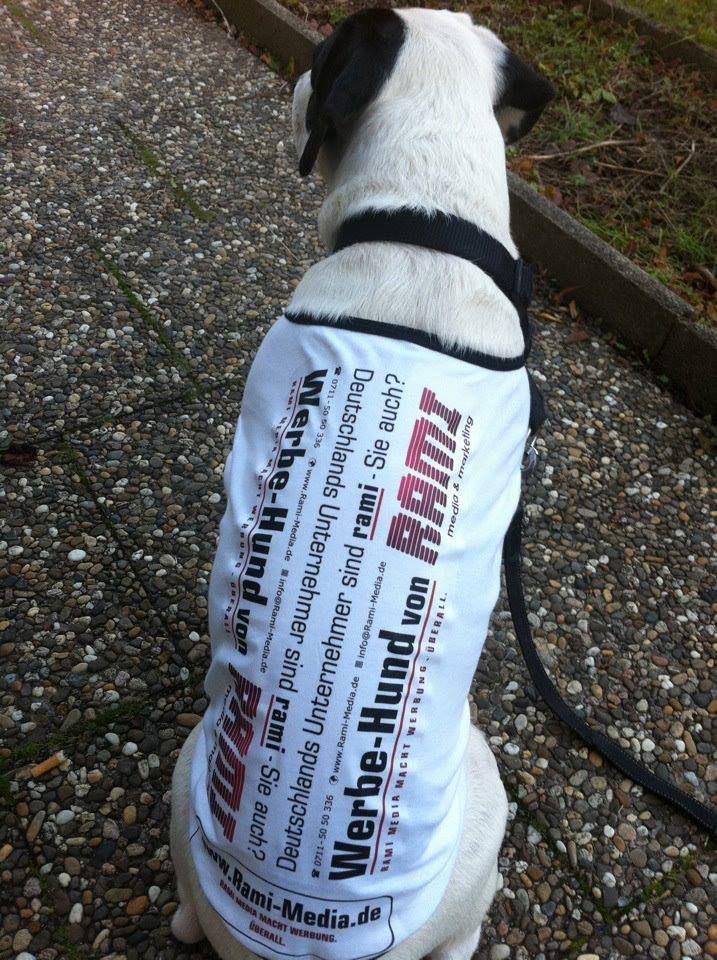 Firmen-Hund in Action @ Rami Media & Marketing.  (www.RAMI-MEDIA.de)