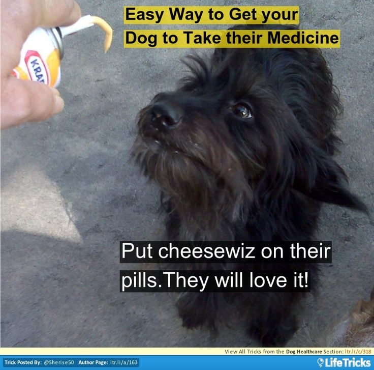 Dog Healthcare - Easy Way to Get your Dog to Take their Medicine