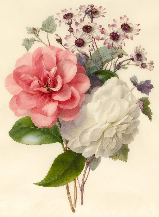 Spray Of Three Flowers Painting  - Spray Of Three Flowers Fine Art Print