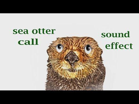 The Impact of Sea Otters on Marine Ecology Essay